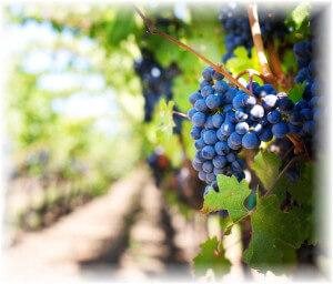grapes-Pix